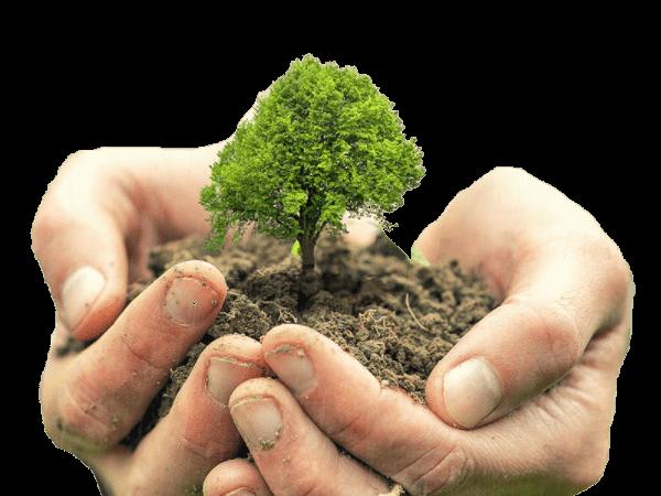 کاشت درخت در کمپین به هوای زمین